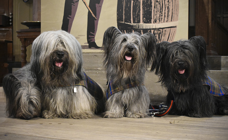 Four Skye terriers