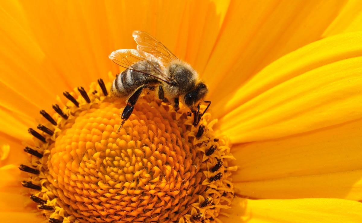 Orange pink flower bee Weekly Worship