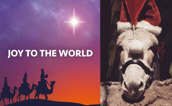 A donkey wearing a Santa hat