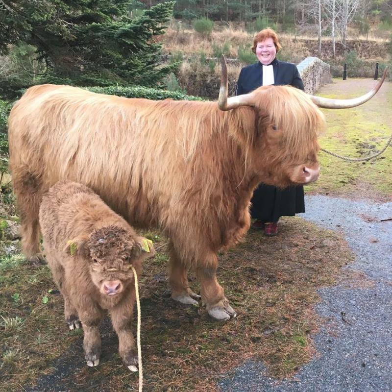 Rev Elspeth McKay with Highland cows