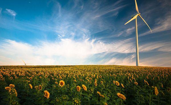 Wind turbine in sunflower field