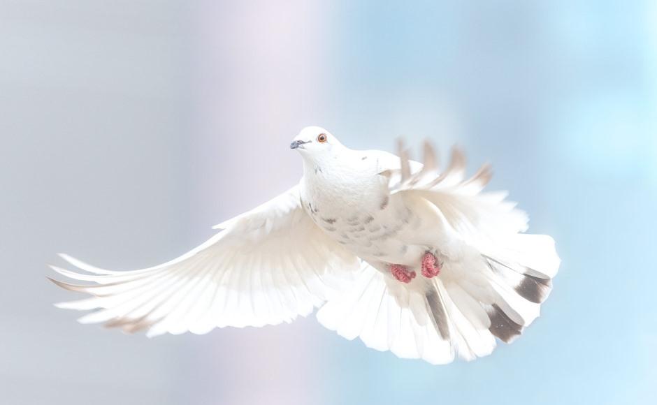 Sri Lanka peace