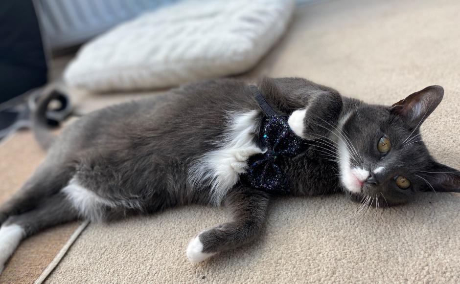 Amy' cat
