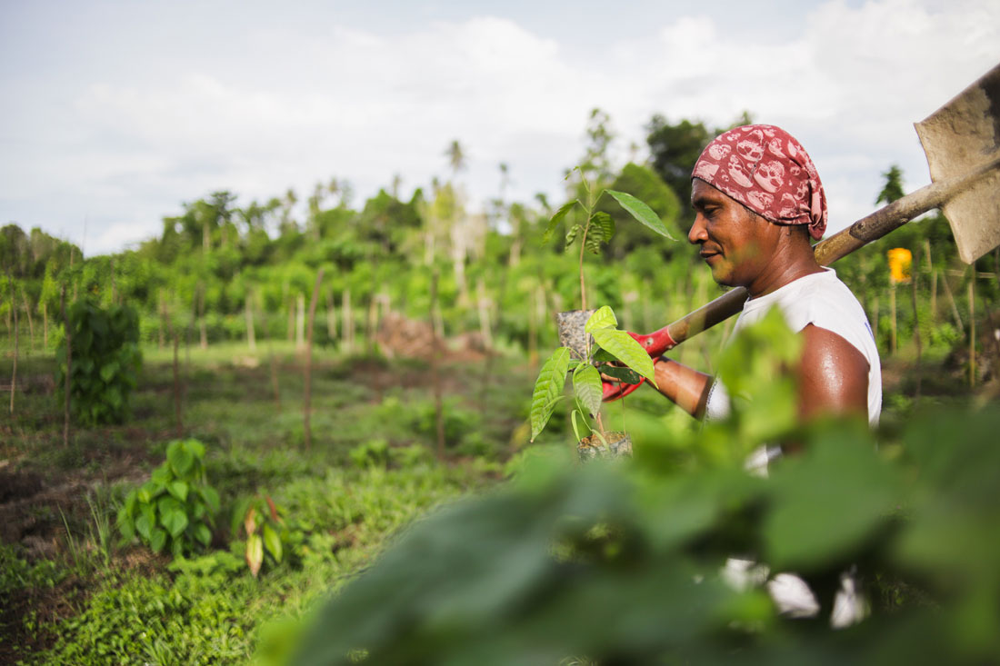 Person planting cacao