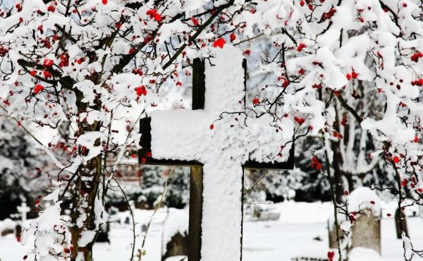 Cross in the snow in the foreground with trees and berries in the background.