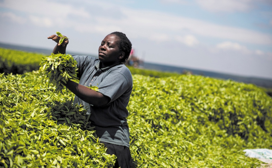 Rahel Mhabuka, a tea worker at Kibena Tea Estate in Tanzania.